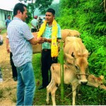 Image - Distribution of Milching cows to SC Beneficiaries under SCA to SCSP